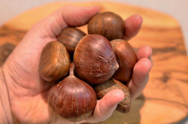 Hand full of chestnuts stock image
