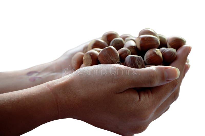 Hand full of hazelnuts stock photos