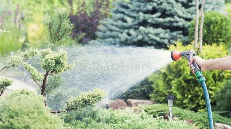 Hand garden hose with water spray, watering flowers, close-up, water splashes, landscape design, alpine slide. Hand garden hose with water sprayer , watering royalty free stock image