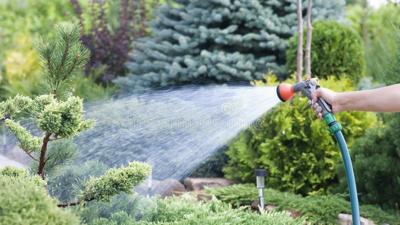 Hand Garden Hose With Water Spray, Watering Flowers, Close-up, Water ...