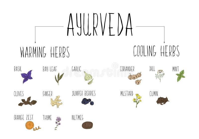Hand-geschetste inzameling van elementen van Ayurvedic-kruiden in onze keuken Verwarmende en koelkruiden en supplementen Ayurveda stock foto