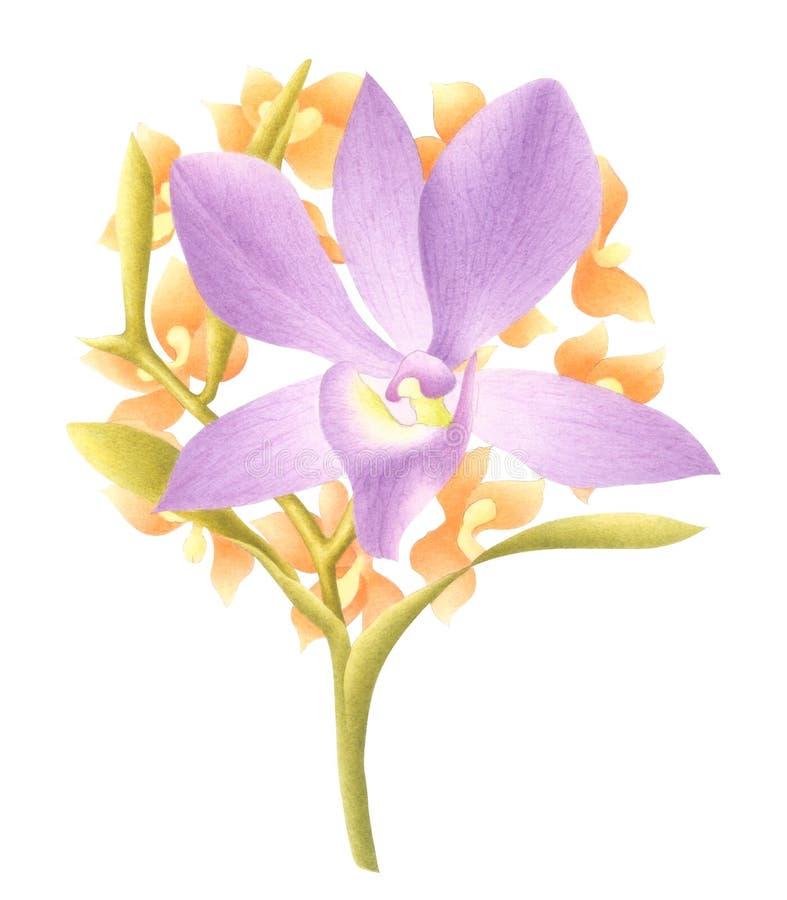Hand Geschilderde Waterverfbloem Het boeket van de waterverforchidee op witte achtergrond wordt geïsoleerd die Met het knippen va royalty-vrije stock foto