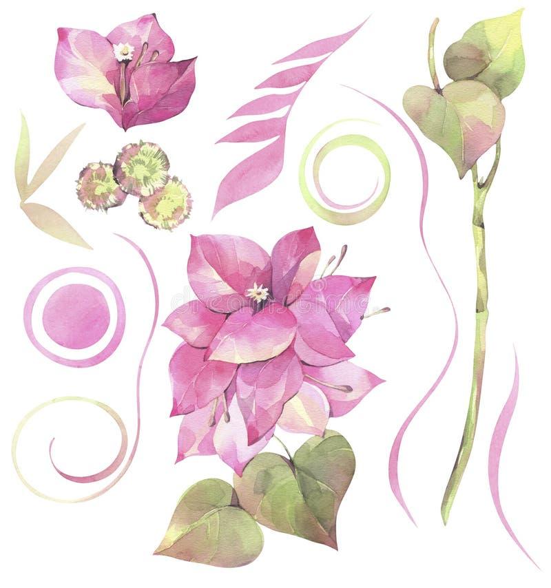 Hand geschilderde waterverfillustratie Bloemenreeks met bloemen van bougainvillea en abstracte elementen stock illustratie