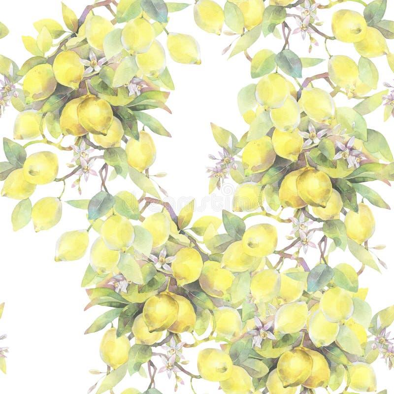 Hand geschilderde waterverfillustratie naadloos patroon met de branche-elementen van de citroenboom stock illustratie