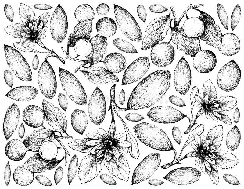 Hand Getrokken Achtergrond van Banaan Passionfruit en Buffels Thorn Fruits vector illustratie
