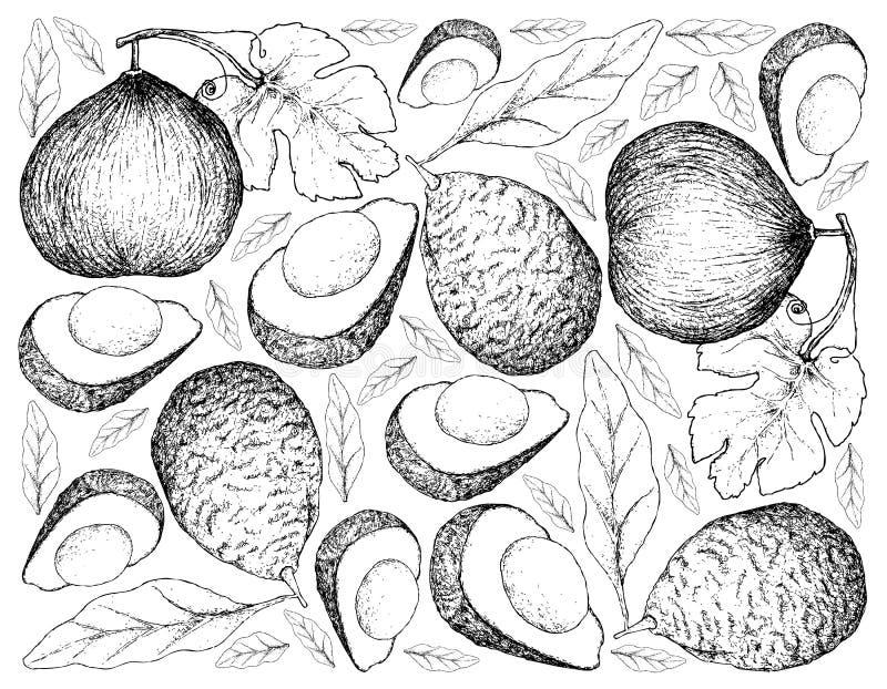 Hand Getrokken Achtergrond van Casaba Meloen en Avocado's stock illustratie