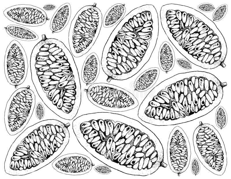 Hand Getrokken Achtergrond van Verse Banaan Passionfruits stock illustratie
