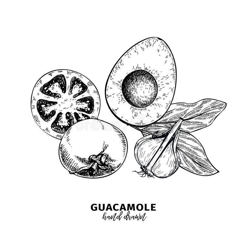 Hand getrokken avocado, tomaat en knoflook De ingrediënten van de Guacamoleonderdompeling Vector gegraveerde kokende pictogrammen royalty-vrije illustratie