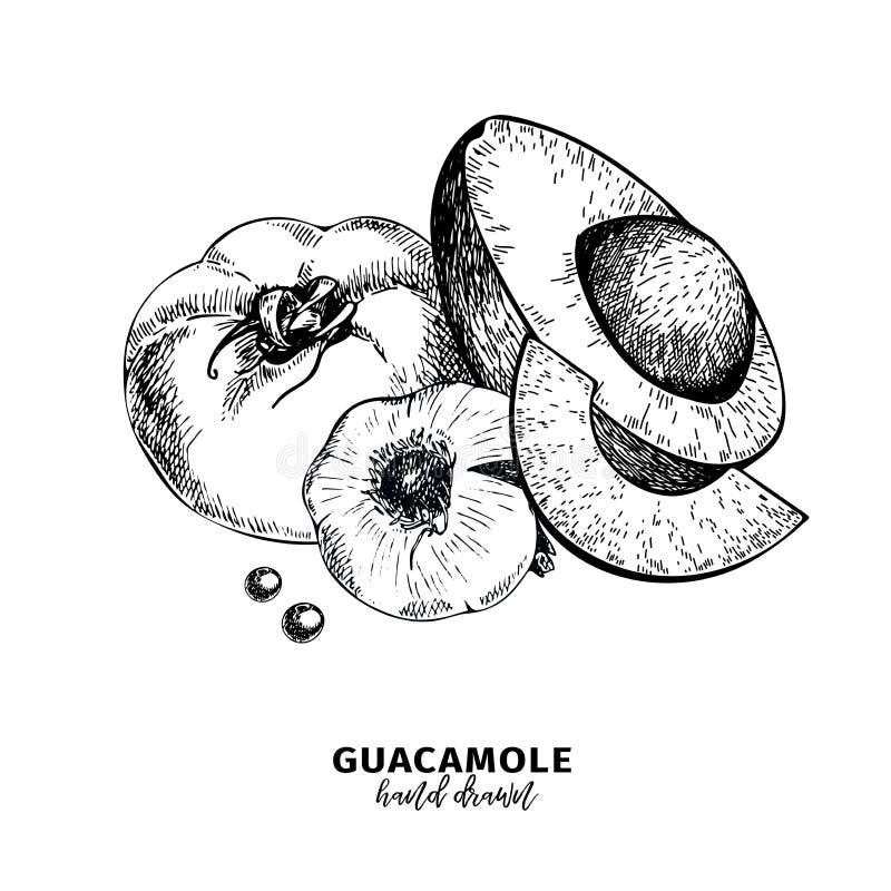 Hand getrokken avocado, tomaat en knoflook De ingrediënten van de Guacamoleonderdompeling Vector gegraveerde kokende pictogrammen stock illustratie