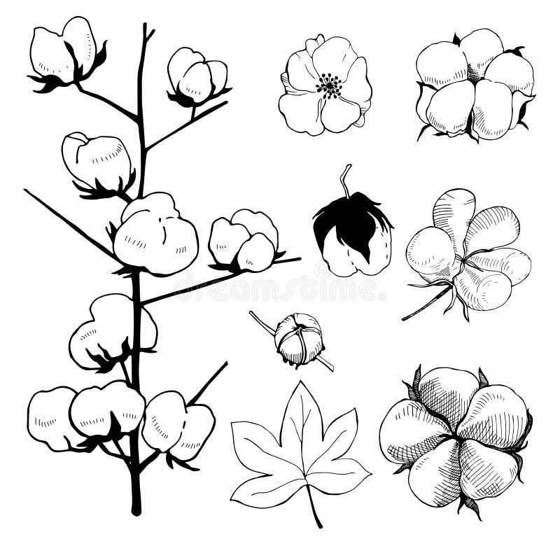 Hand getrokken bloemen Katoenen installatiebloem royalty-vrije illustratie