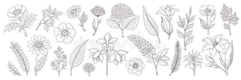 Hand getrokken bloemen Uitstekende bloemenschets, de takken van de zomerbladeren en kruideninzameling Vectorgebladerte en boeket vector illustratie