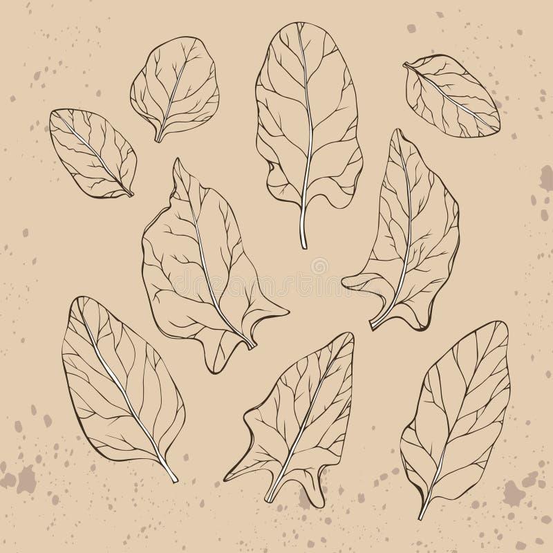 Hand getrokken de lijnart. van spinaziebladeren stock illustratie