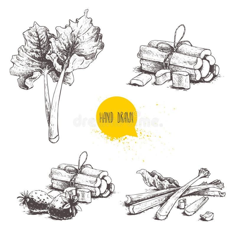 Hand getrokken de rabarberreeks van de schetsstijl gesneden bladeren, bossen en geheel met aardbeiensamenstelling Natuurvoedingco stock illustratie