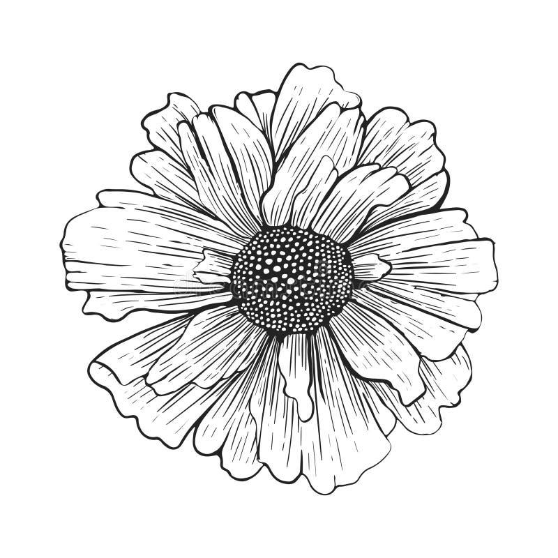 Hand getrokken die bloem op witte achtergrond wordt geïsoleerd Vector illustratie vector illustratie