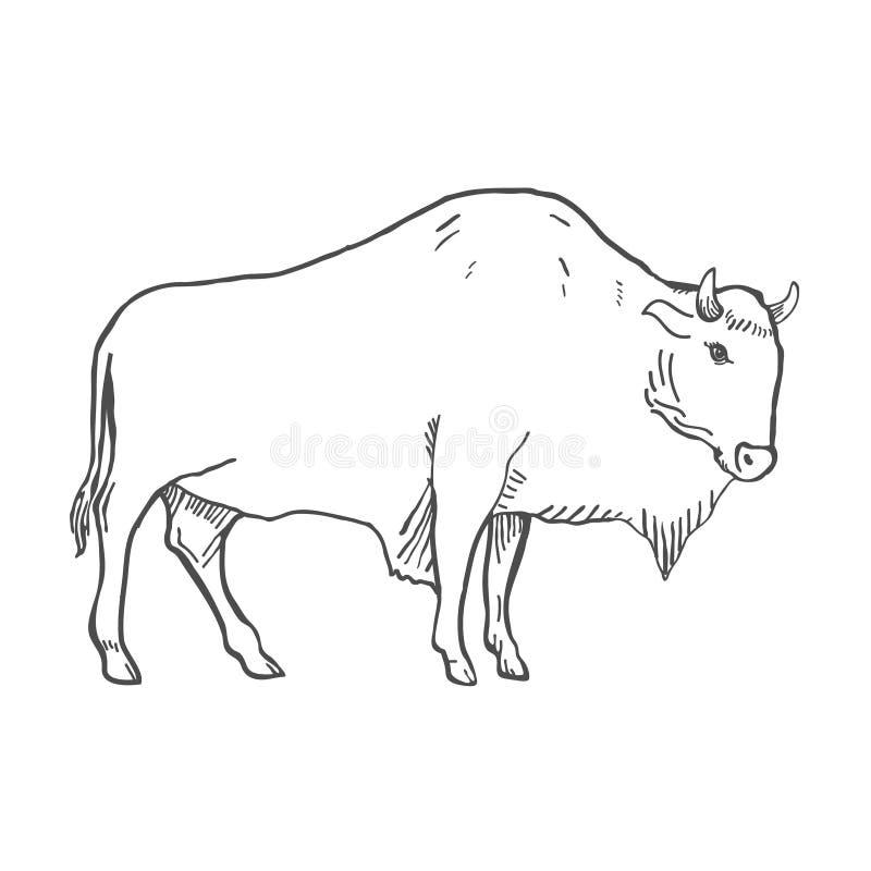 Hand Getrokken die Buffelsillustratie op wit wordt geïsoleerd Vector vector illustratie