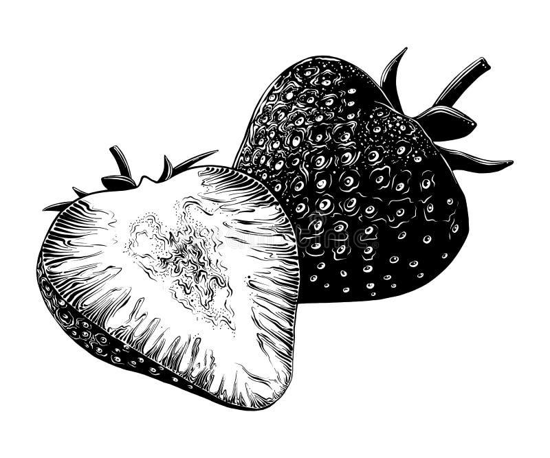 Hand getrokken die schets van aardbei in zwarte op witte achtergrond wordt geïsoleerd Gedetailleerde uitstekende stijltekening, v vector illustratie