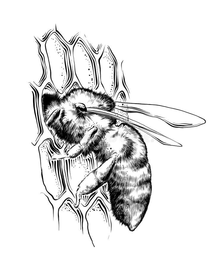 Hand getrokken die schets van bij op honingraten in zwarte op witte achtergrond wordt geïsoleerd De gedetailleerde uitstekende te royalty-vrije illustratie