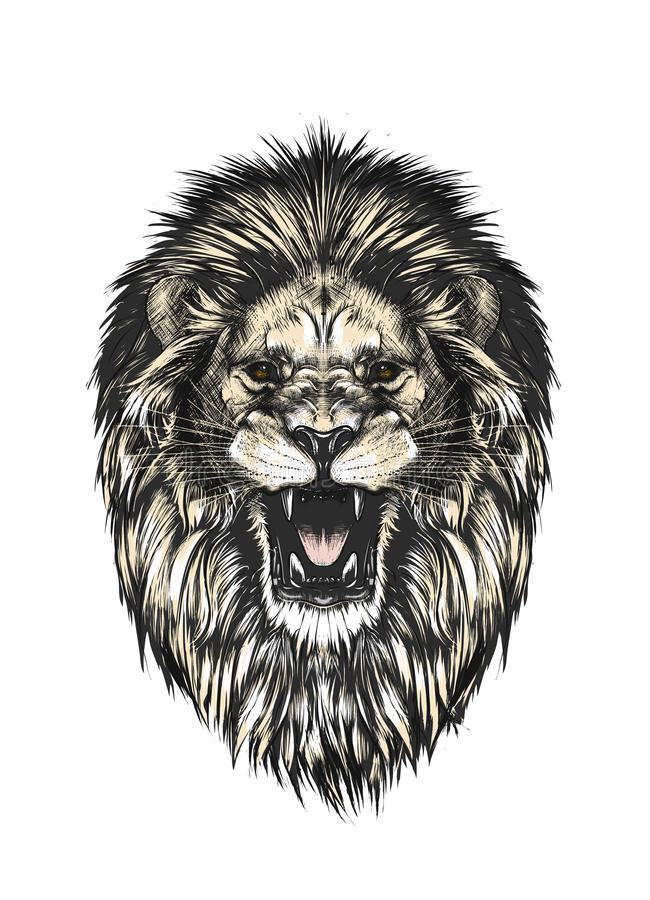 Hand getrokken die schets van leeuwhoofd in kleur op grijze achtergrond wordt geïsoleerd Gedetailleerde uitstekende stijltekening royalty-vrije illustratie