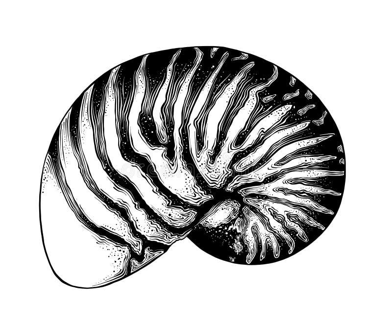 Hand getrokken die schets van nautilusshell in zwarte op witte achtergrond wordt geïsoleerd Gedetailleerde uitstekende stijlteken royalty-vrije illustratie