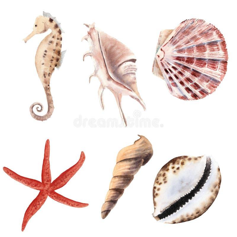 Hand getrokken die waterverf met geïsoleerde shells, zeester en zeepaardje wordt geplaatst stock illustratie