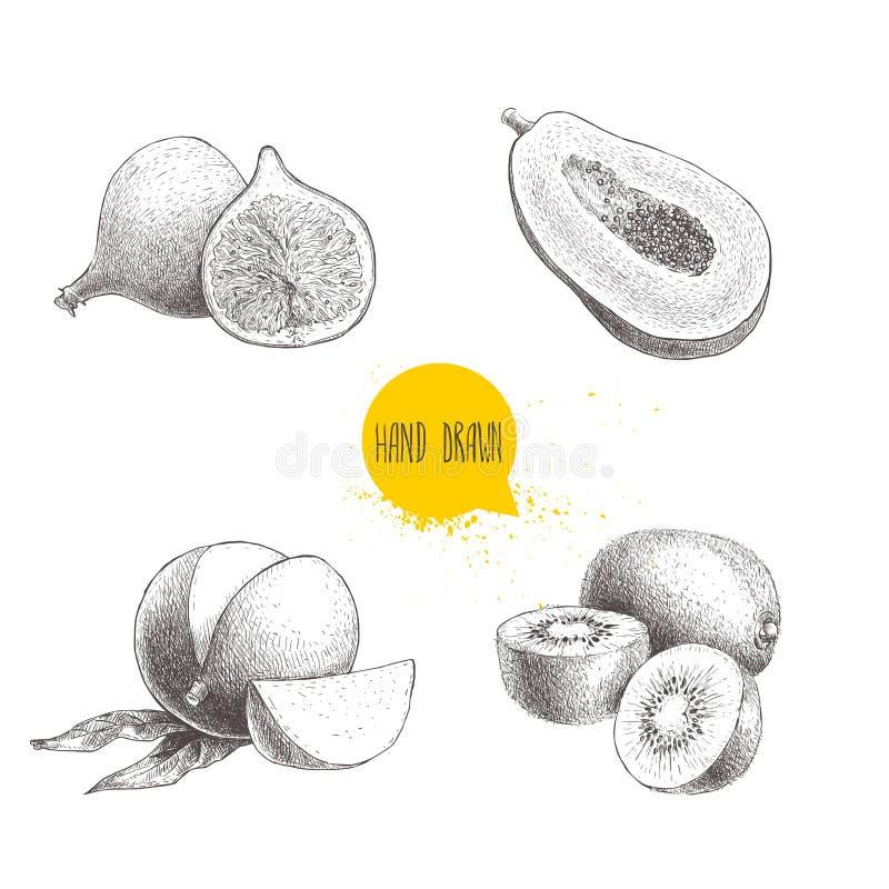 Hand getrokken exotische geplaatste vruchten Fig.fruit, papaja met zaden, mango en kiwivruchten wordt gesneden die Isoleert de de royalty-vrije illustratie