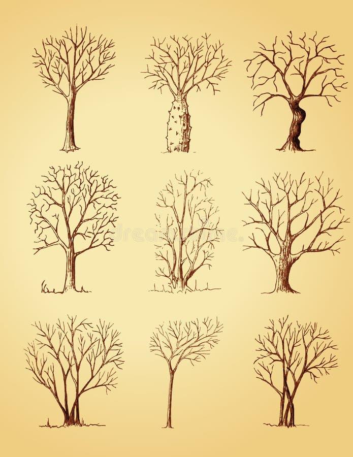 Hand getrokken geïsoleerde bomen stock illustratie