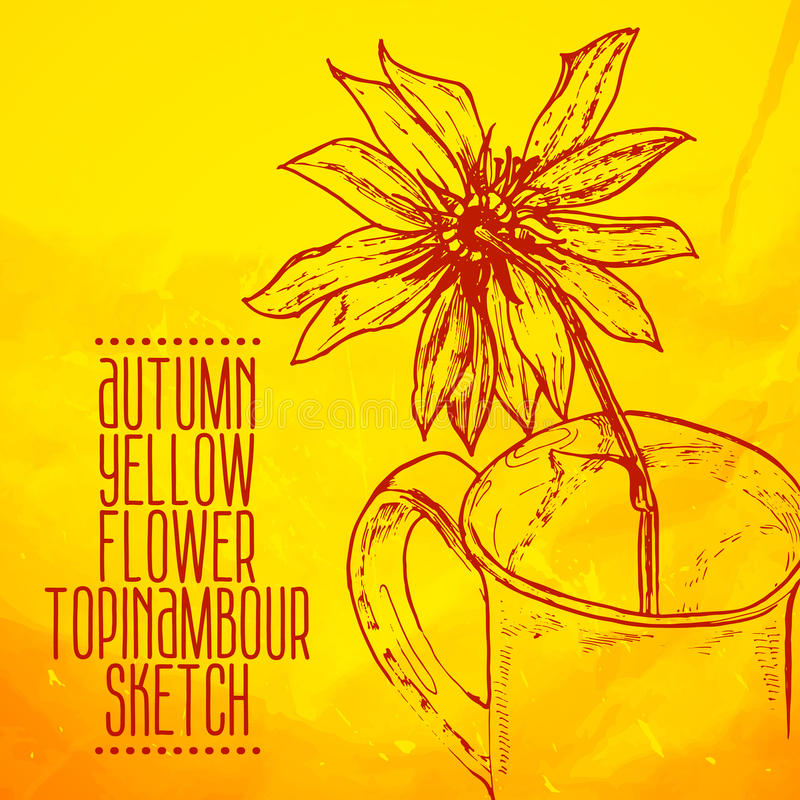 Hand getrokken gele bloem topinambour schets royalty-vrije illustratie