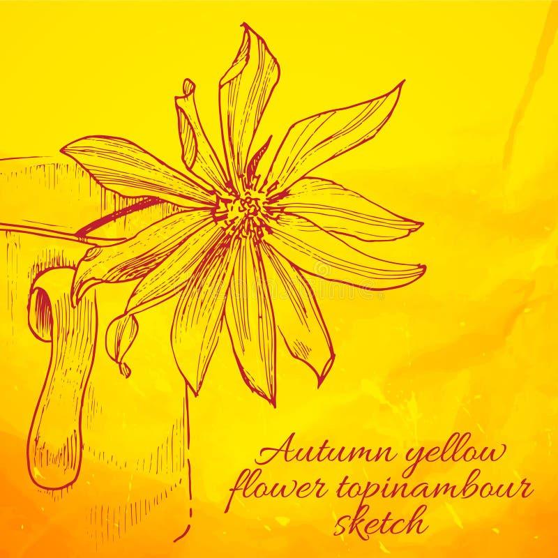Hand getrokken gele bloem topinambour schets vector illustratie