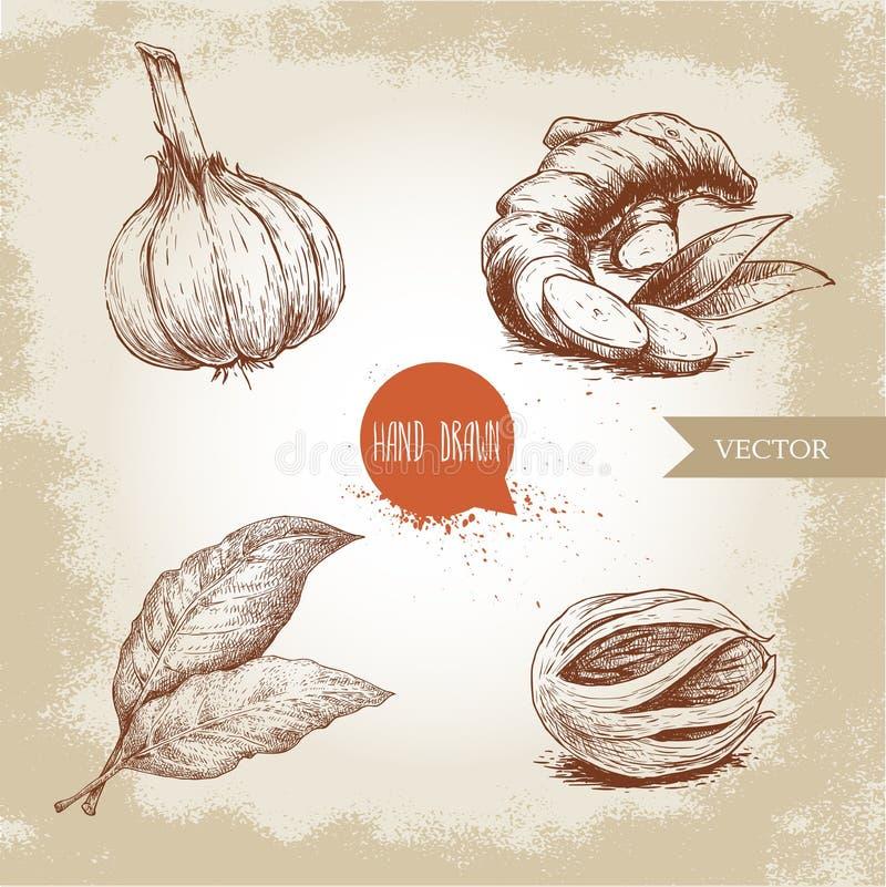 Hand getrokken geplaatste schetskruiden Knoflook, gemberwortel, baaibladeren en notemuskaatfoelie Kruiden, specerijen en kruiden  royalty-vrije illustratie