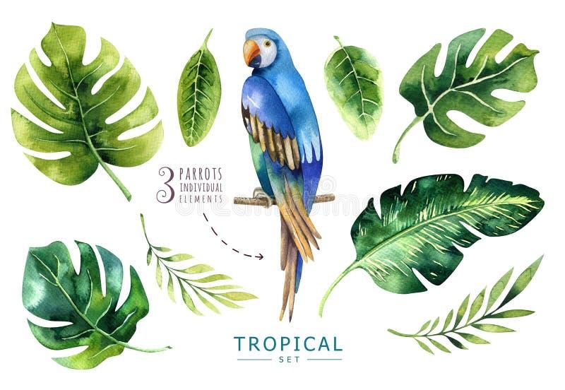 Hand getrokken geplaatste waterverf tropische installaties en papegaai Exotische pa vector illustratie