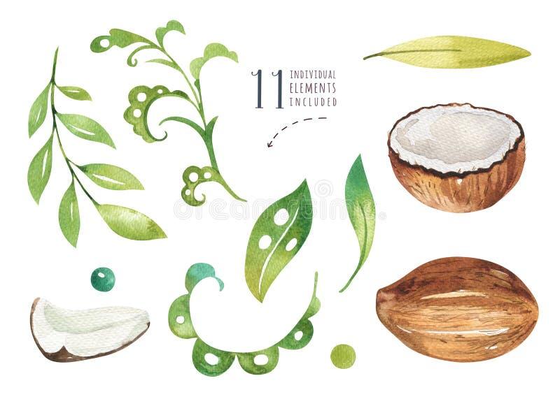 Hand getrokken geplaatste waterverf tropische installaties Exotische palmbladen, wildernisboom, tropische de plantkundeelementen  vector illustratie