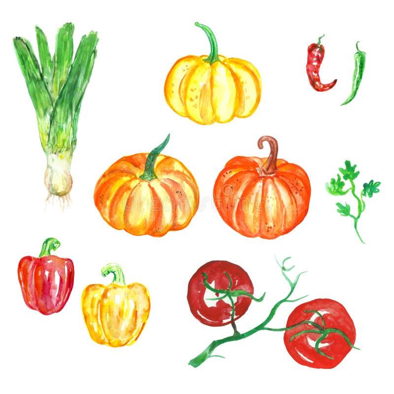 Hand Getrokken geplaatste waterverfgroenten Verse voedselillustratie, oogstseizoen stock illustratie