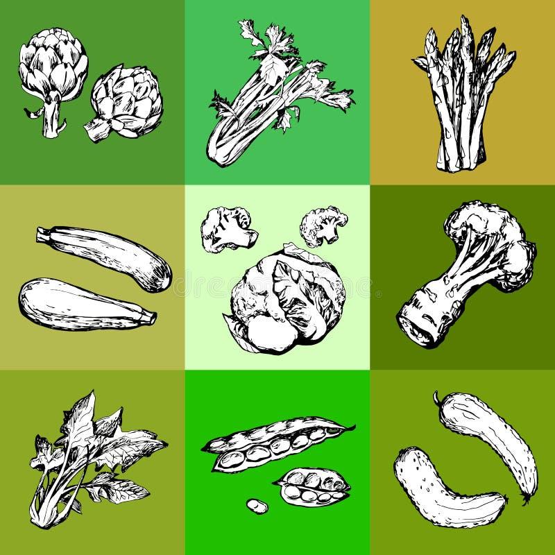 Hand getrokken groene groenten vector illustratie