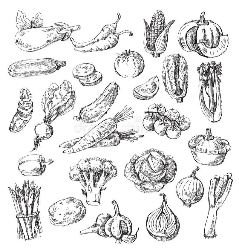Hand getrokken groente stock illustratie