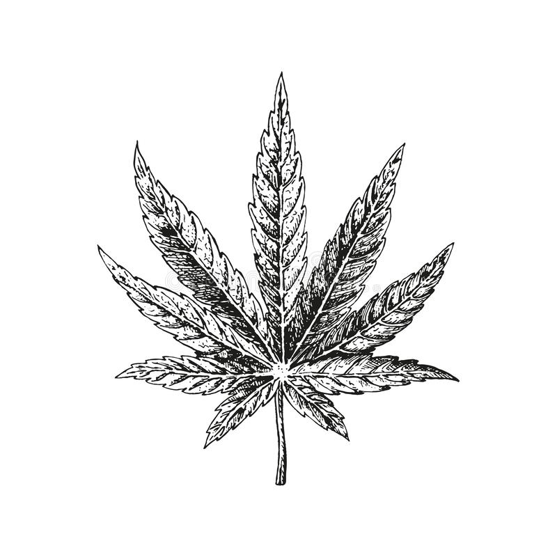 Hand getrokken hennepblad Cannabisinstallatie Vectorschets van marihuana vector illustratie