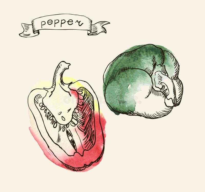 Hand getrokken illustratie van peper vector illustratie