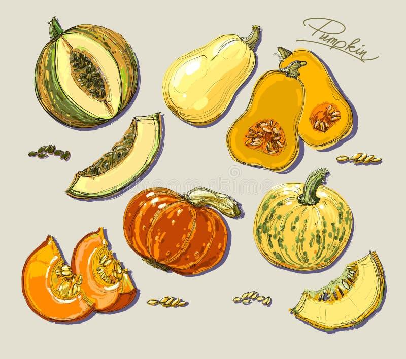 Hand getrokken illustratie van pompoen stock illustratie