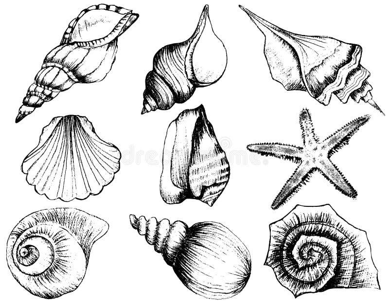 Hand getrokken inzameling van diverse zeeschelpillustraties royalty-vrije illustratie