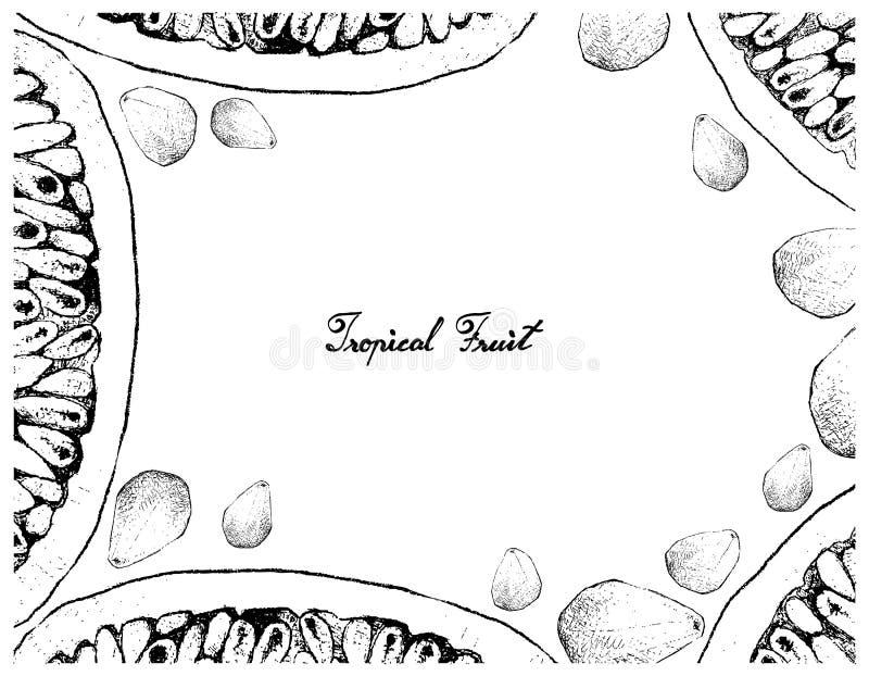Hand Getrokken Kader van Banaan Passionfruit en Cempedak stock illustratie