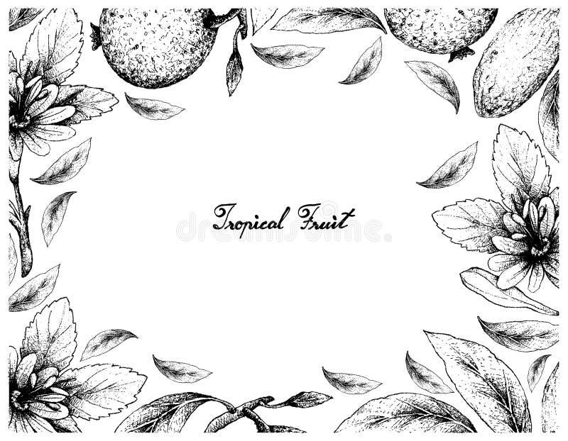 Hand Getrokken Kader van Borojo en Banaan Passionfruit vector illustratie