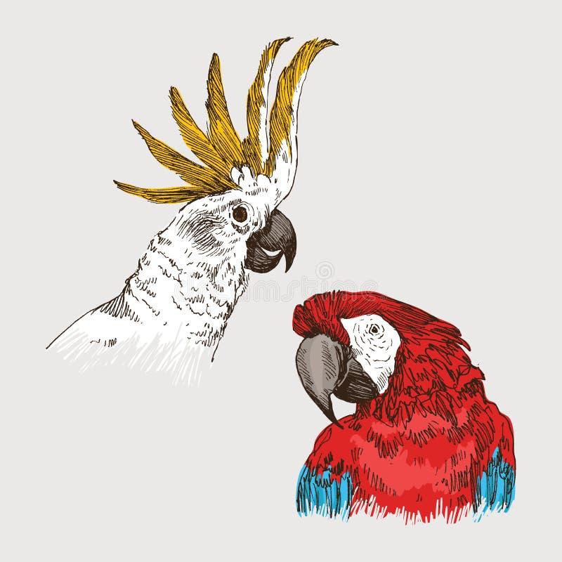 Hand getrokken kleurrijke schets uitstekende exotische tropische vogel Hoofd van papegaaiara en kaketoe Vector Geïsoleerdel illus vector illustratie