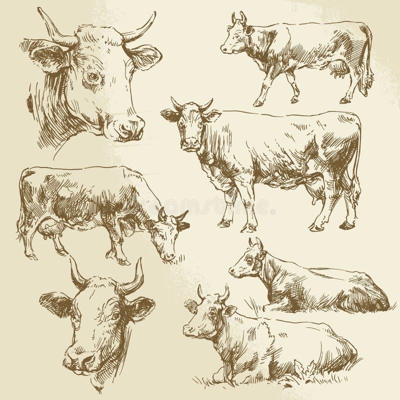 Hand getrokken koeien stock illustratie