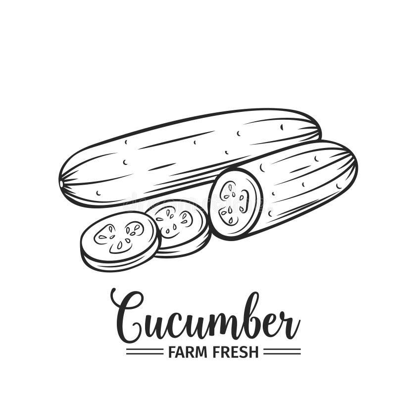 Hand getrokken komkommerpictogram vector illustratie