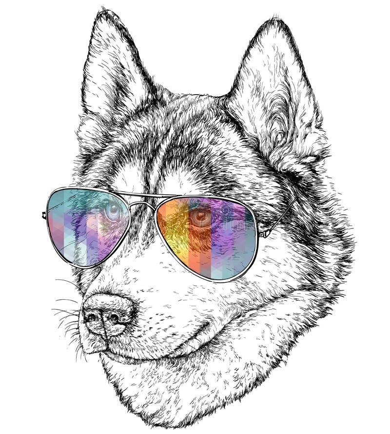 Hand Getrokken Manierillustratie van Husky Hipster met vliegenierszonnebril vector illustratie