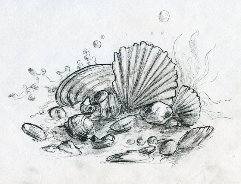 Hand getrokken potloodschets van peebles en shells vector illustratie