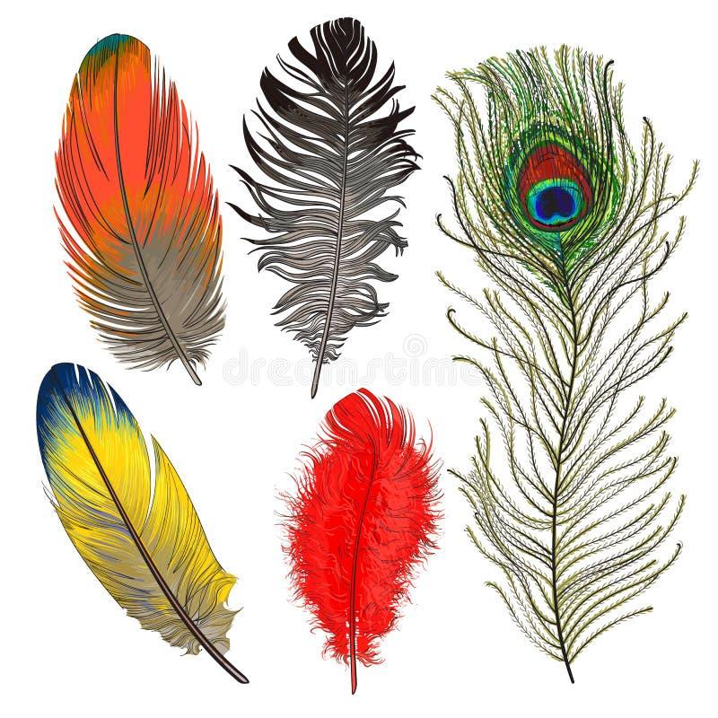 Hand getrokken reeks diverse kleurrijke vogelveren, vectorillustratie vector illustratie