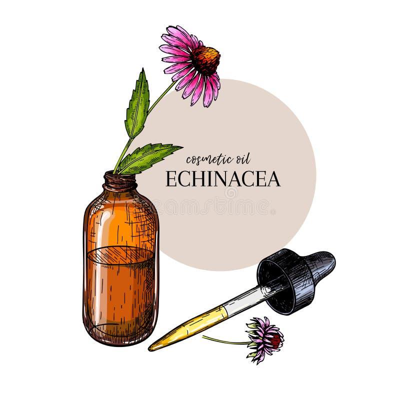 Hand getrokken reeks etherische oliën De vectorbloem van echinaceapurpurea Geneeskrachtig kruid, de fles van het glasdruppelbuisj stock illustratie