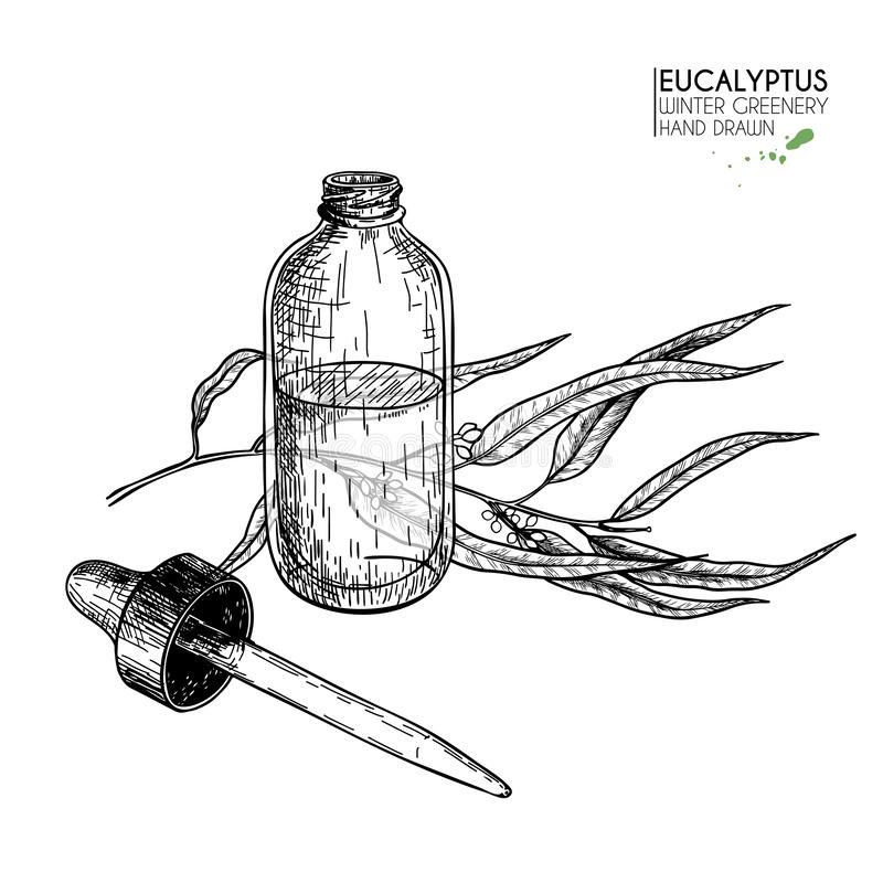 Hand getrokken reeks etherische oliën Vectoreucalyptustak Geneeskrachtig kruid met de fles van het glasdruppelbuisje Gegraveerd a stock illustratie