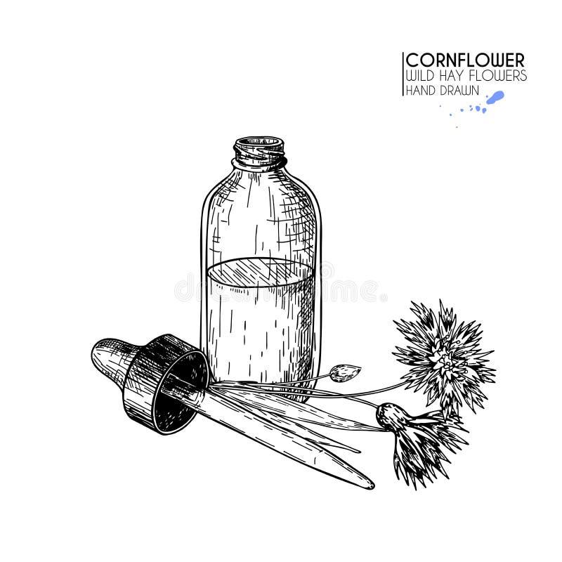 Hand getrokken reeks etherische oliën Vectorkorenbloembloem Geneeskrachtig kruid met de fles van het glasdruppelbuisje Gegraveerd vector illustratie
