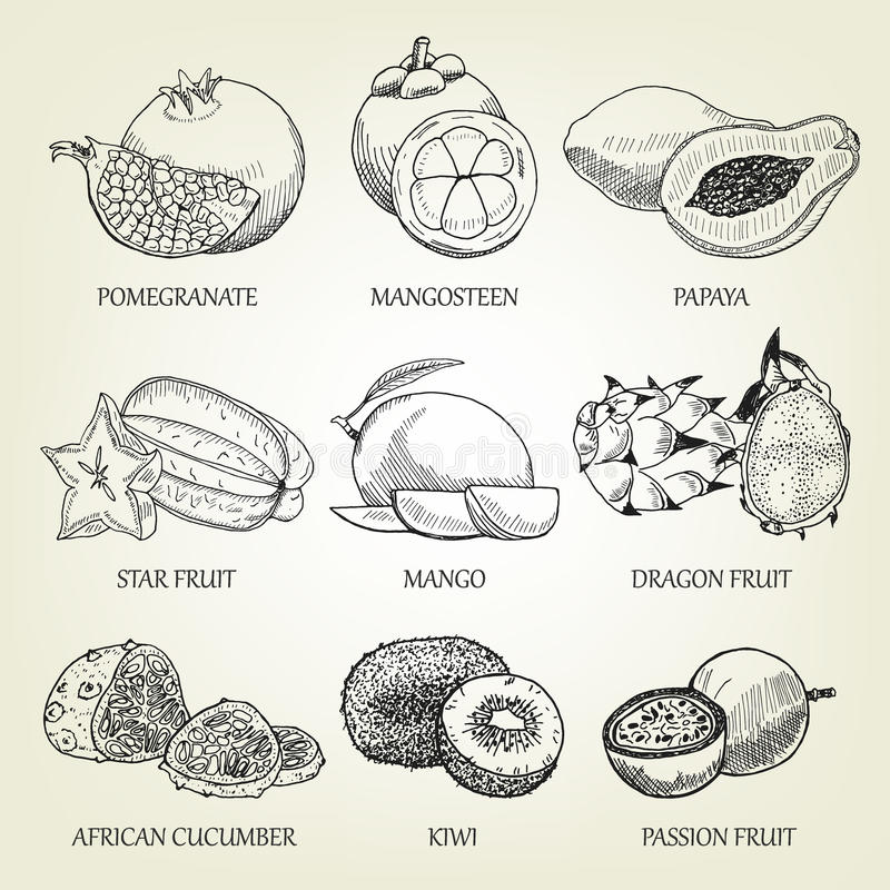 Hand getrokken reeks verschillende tropische vruchten Overzichts realistische pictogrammen van gezond voedsel royalty-vrije illustratie
